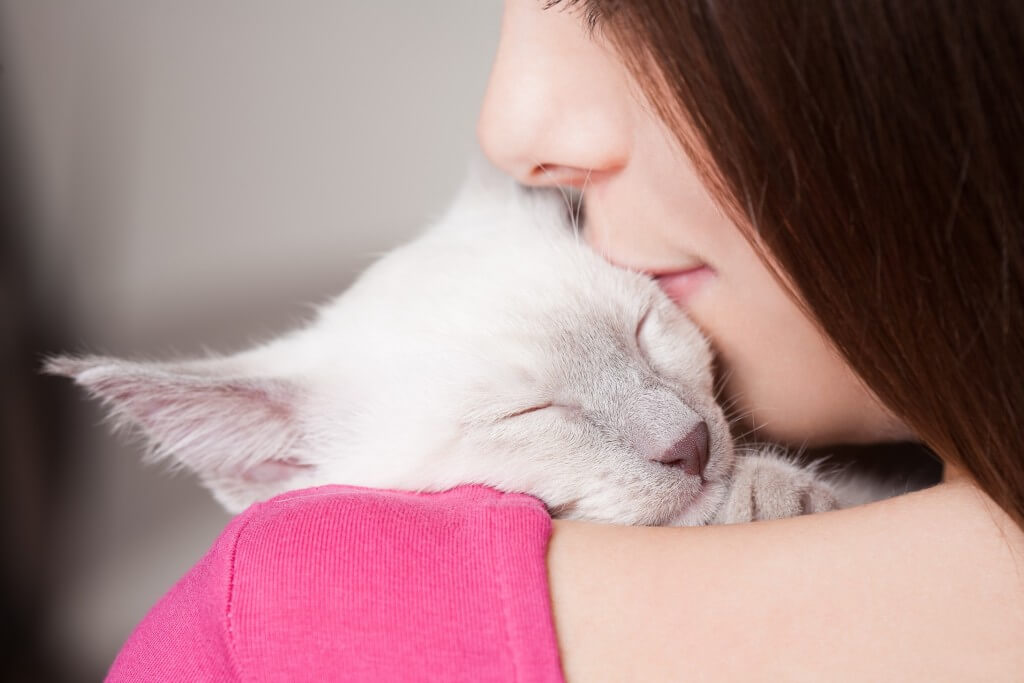 Diagnosis and Treatment of Cancer in Cats