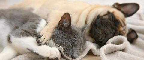 dogs and cats spays and neuters