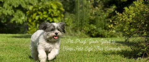 Pet proof your yard for summer