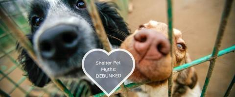 shelter pet myths debunked