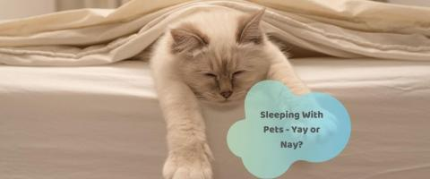 sleeping with pets can have adverse health issues