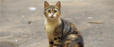 tips for finding lost cats