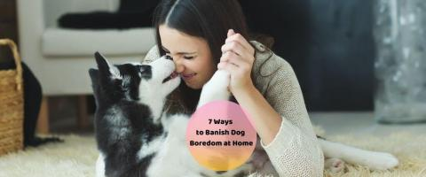 ways to play with your dog at home
