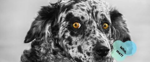funny dog behaviors