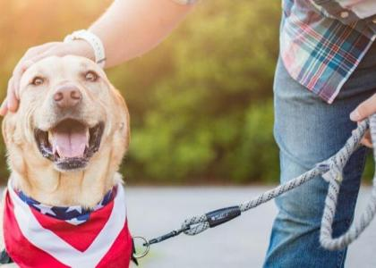 keep your pets safe on 4th of July with microchipping
