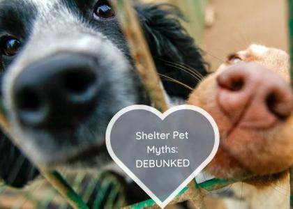 shelter pet myths debunked